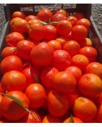 Kg de Mandarinas Sevillanas