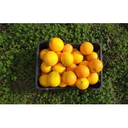 Ya se pueden comprar nuestras naranjas ecológicas de Sevilla y de la campaña 2018/2019.